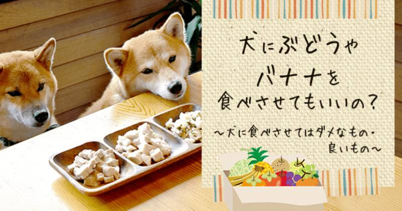 れる 野菜 食べ 犬