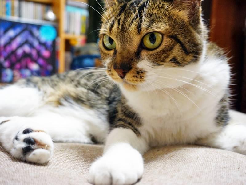 絶妙なる猫のプチ嫌がらせ!