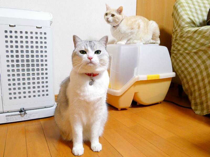 すばらしいぞ!猫のトイレの習性!