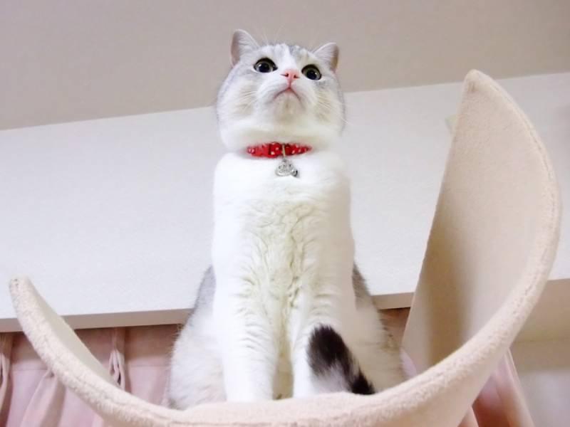 猫のケガの原因は・・・