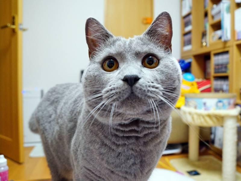 ムームーとお水と猫のDNA