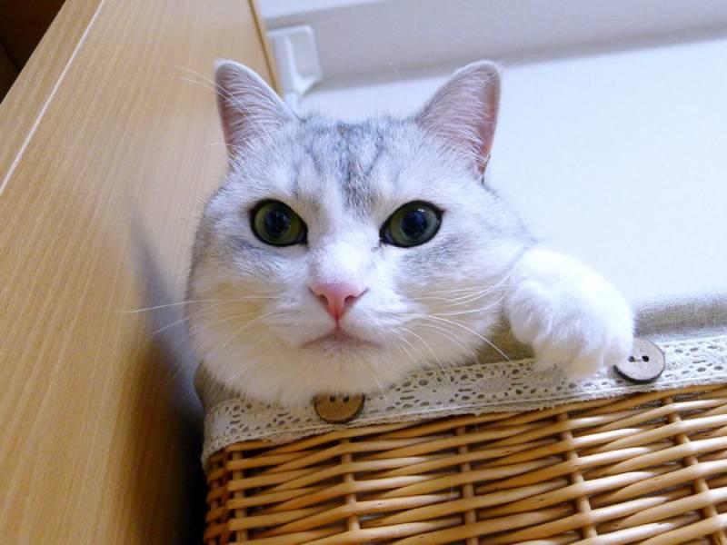 猫の抗議は年齢順?