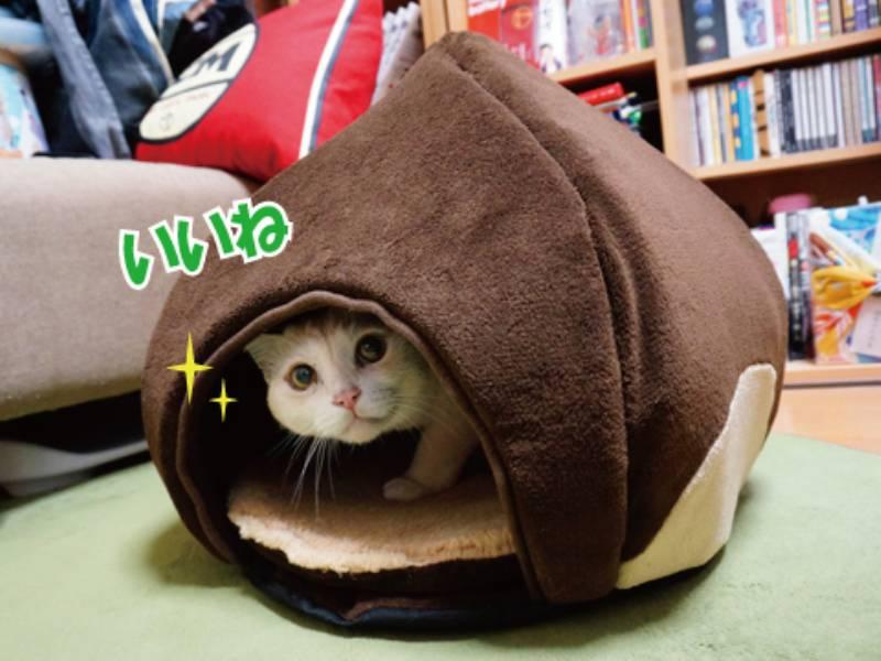 ドキドキのNew猫ベッド!